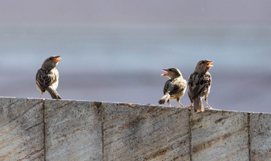 Компания Google запустила конкурс по созданию алгоритма расшифровки пения птиц