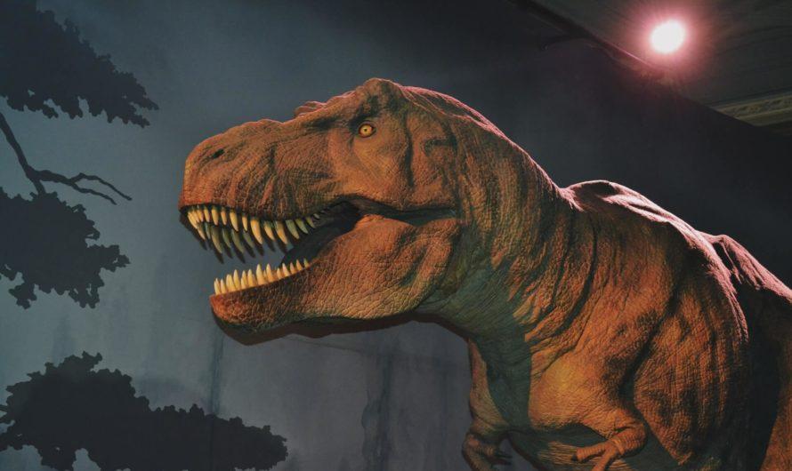 Google внедрила функцию поиска с дополненной реальностью, позволяющую увидеть 3D-модели динозавров