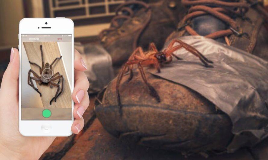 В Австралии создали приложение, которое может распознавать пауков и змей