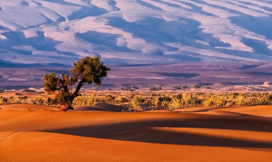 Искусственный интеллект нашёл более миллиарда деревьев в пустыне Сахара