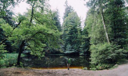 Нейросеть помогла найти пропавшего в лесу человека