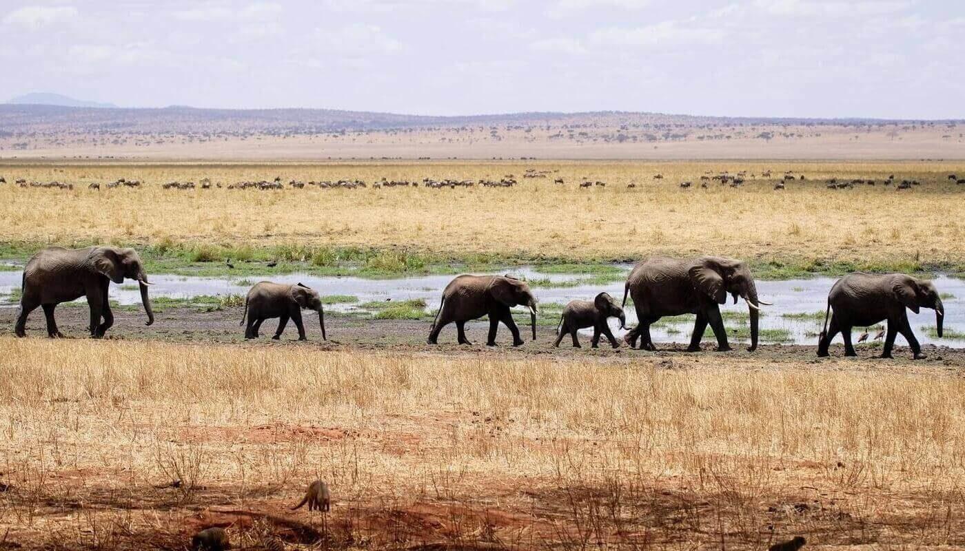 Слонов посчитала нейросеть