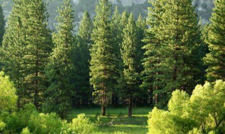 Породы деревьев различает нейросеть