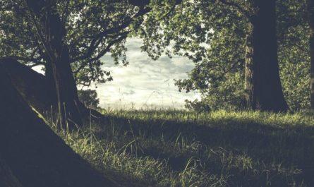 Повреждённые участки леса ищет нейросеть
