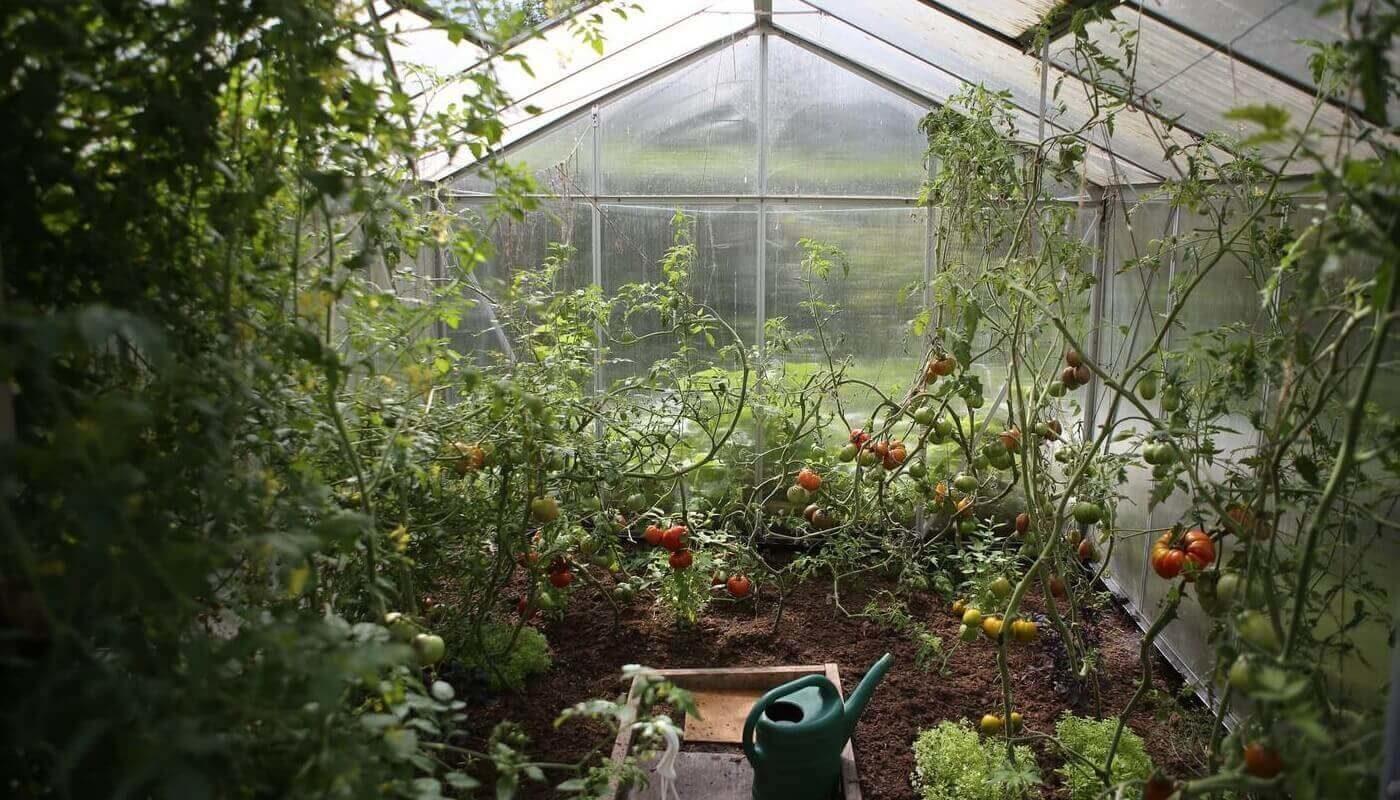 Рост растений в автономных теплицах контролирует ИИ
