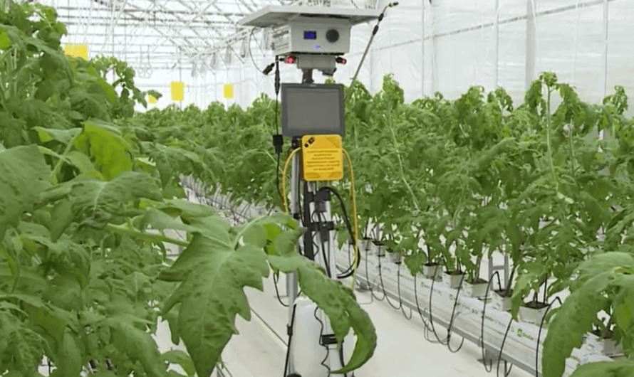 Мичуринские учёные создали робота, который защищает растения от вредителей
