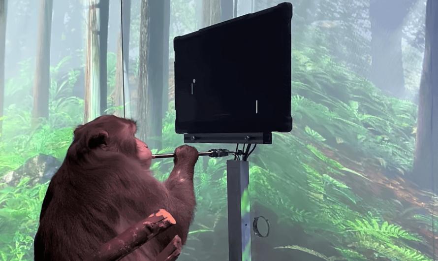 Компания Илона Маска Neuralink показала обезьяну, играющую в видеоигры силой мысли