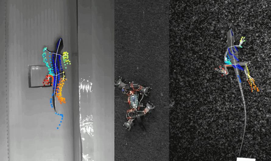 Создан робот-ящерица, который умеет ползать по стене