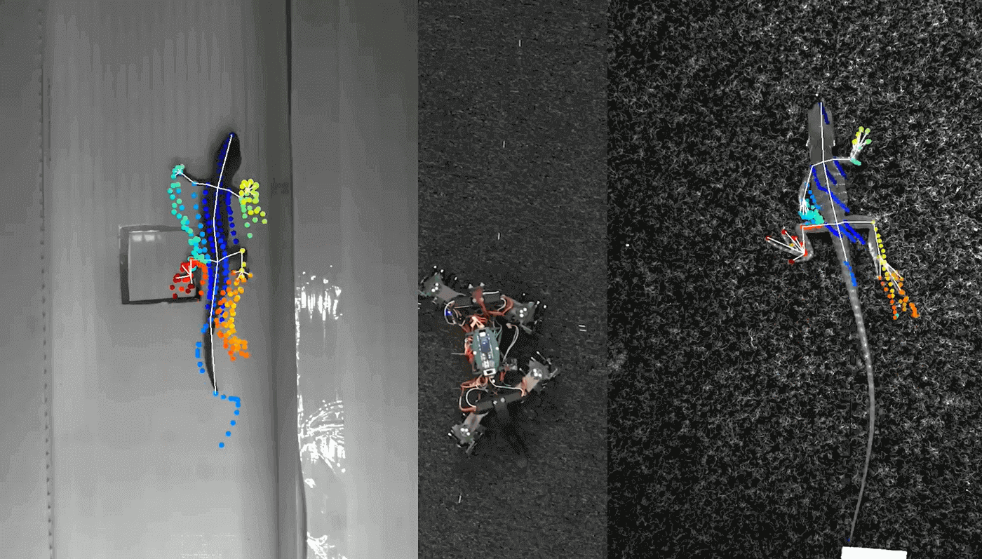 Робоящерица научилась ползать по стене