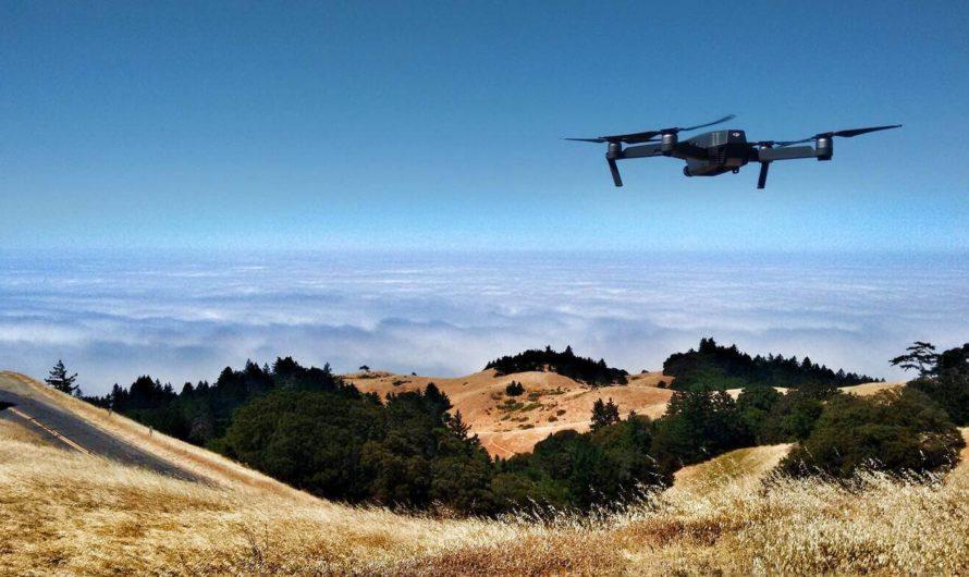 Беспилотники с искусственным интеллектом помогут находить борщевик Сосновского