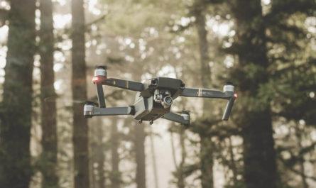 Незаконные рубки леса будут пресекать дроны с ИИ