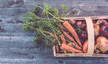 Урожай прогнозирует нейросеть