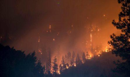 Влияние пожаров на площадь лесов показала Н