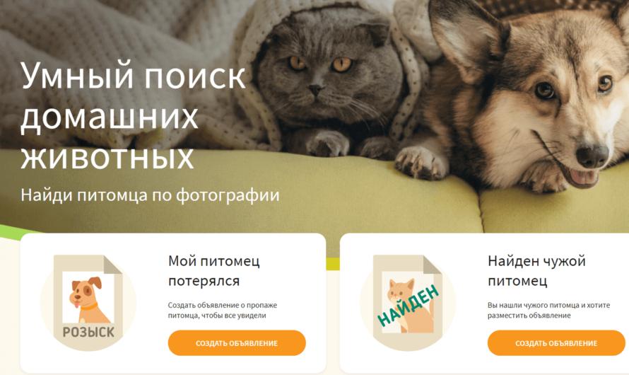 В России запущен сервис для «умного» поиска потерявшихся домашних животных
