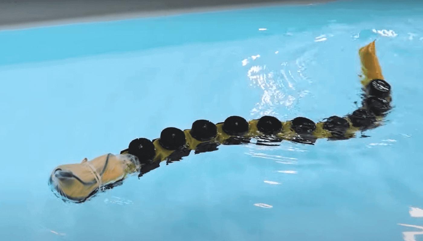 Swimming robot gives fresh insight into neuroscience