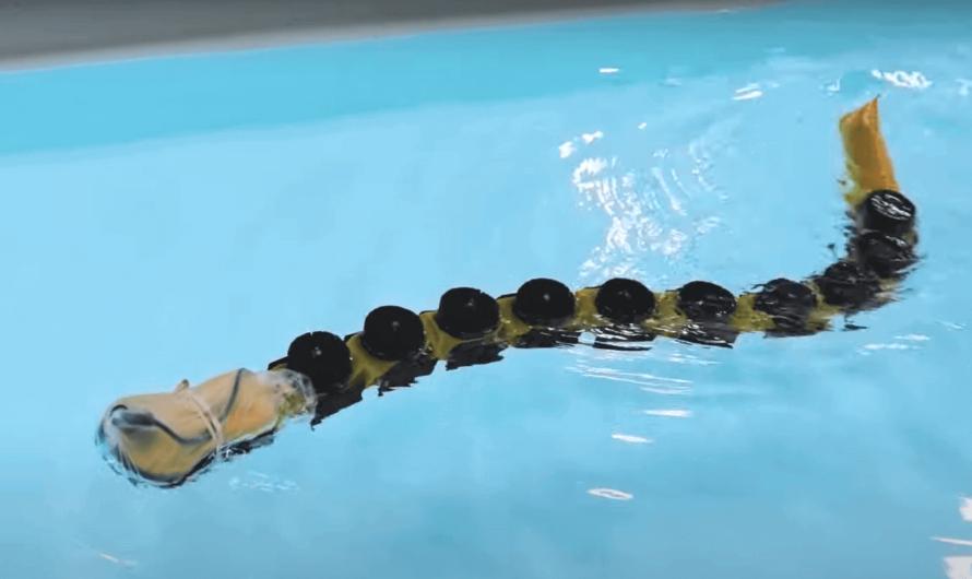 Новый плавающий робот помог лучше понять нейробиологию движения